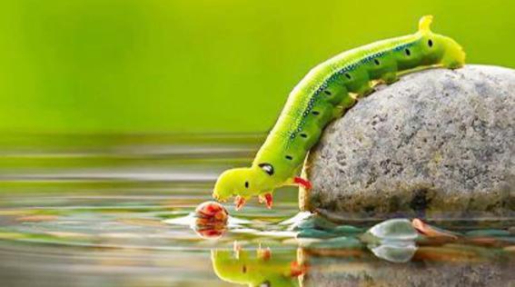 الطبيعة جمال ساحر وعفوي
