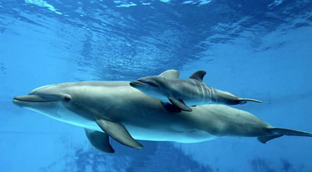 بالصور ولادة دلفين