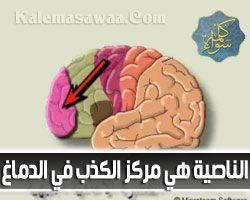 الناصية هي مركز الكذب في الدماغ