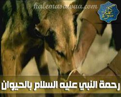 رحمة النبي صلى الله عليه وسلم بالحيوان