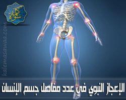 الإعجاز النبوي في عدد مفاصل جسم الإنسان