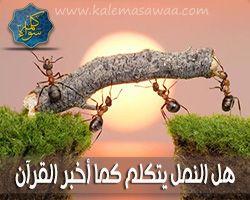 هل النمل يتكلم كما أخبر القرآن ؟