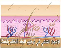 الإعجاز القرآني في تركيب الجلد ( كمثل الكلب إن تحمل عليه يلهث أو تتركه يلهث )